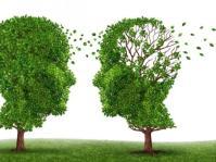 omgaan met dementieboom